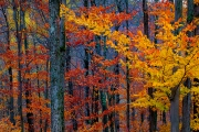Forest Of Color, The Laurentians, Quebec, Canada