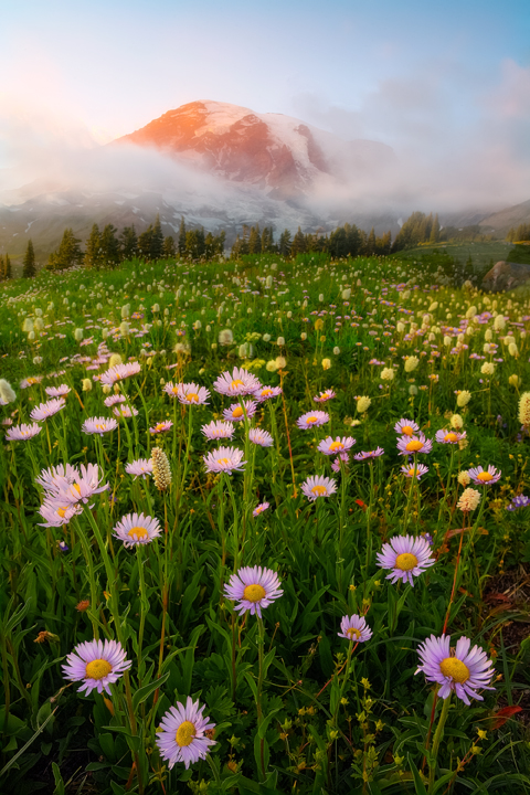 Aster Foregound And Alpenglow_720