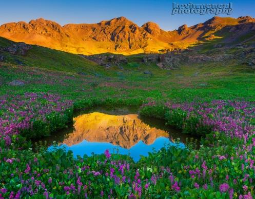 Lupine Surrounding Pond In Colorado Rockies
